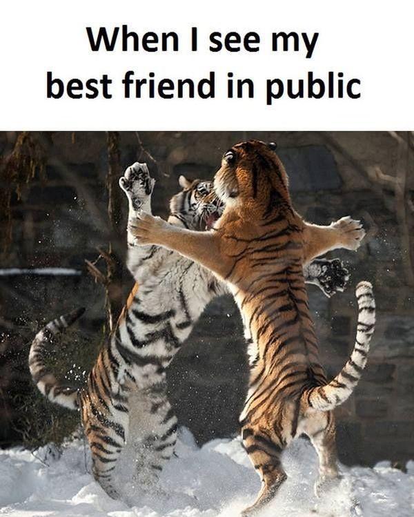 Funny Best Friend Memes [Noviembre 2019] 22